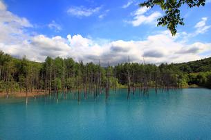 白金青い池の写真素材 [FYI00269580]