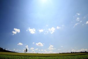 麓郷展望台の草原の素材 [FYI00269607]