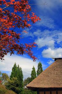 紅葉と茅葺屋根の素材 [FYI00269639]