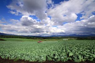 農薬散布中のキャベツ畑の写真素材 [FYI00269656]
