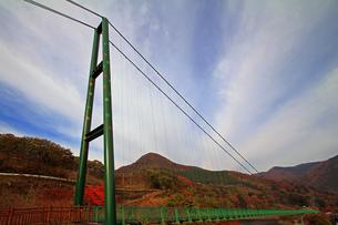 もみじ谷大吊橋の写真素材 [FYI00269684]