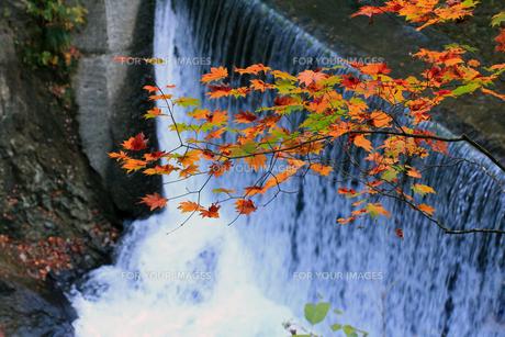 鳴子峡の滝と紅葉の素材 [FYI00269695]