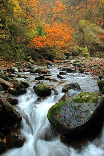 紅葉川渓谷の川の流れの素材 [FYI00269700]