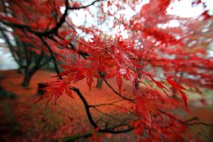 土津神社女坂の紅葉の素材 [FYI00269703]
