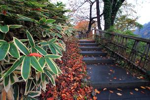 笹と秋の石段の写真素材 [FYI00269709]