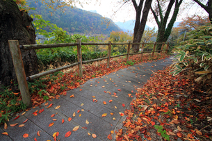 秋の小道の写真素材 [FYI00269710]