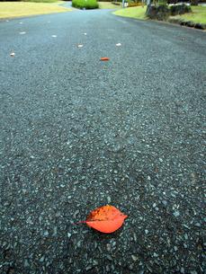 歩道の落ち葉の素材 [FYI00269717]