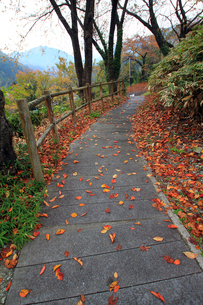 秋の散歩道の素材 [FYI00269719]