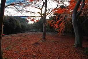 松島四大観扇谷の展望の素材 [FYI00269721]