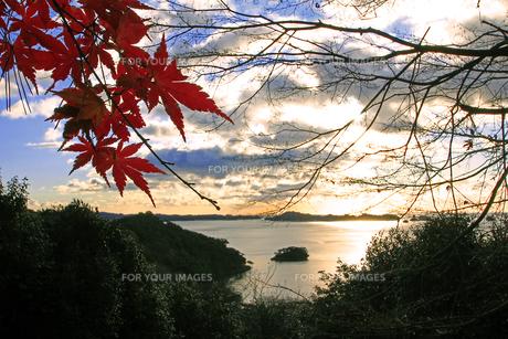 紅葉と松島四大観扇谷展望の素材 [FYI00269726]