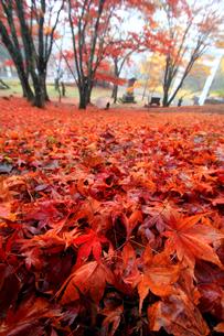 土津神社女坂の紅葉の素材 [FYI00269732]