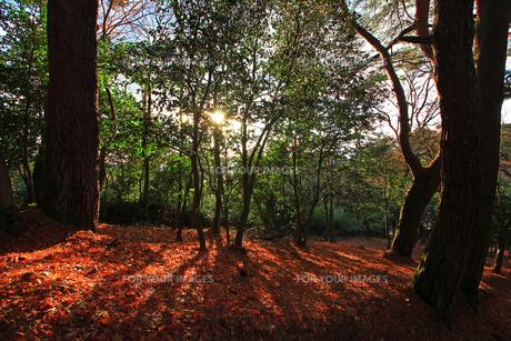 松島四大観扇谷の林の写真素材 [FYI00269735]
