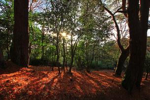 松島四大観扇谷の林の素材 [FYI00269735]