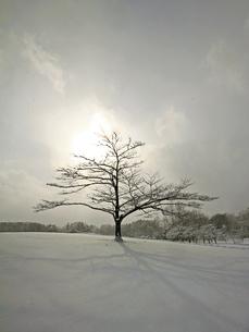 雪原の一本木の素材 [FYI00269766]