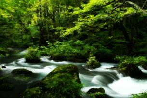 奥入瀬渓流の写真素材 [FYI00269883]