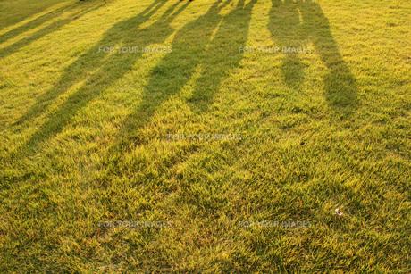 芝生の素材 [FYI00269973]