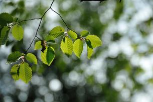 新緑の写真素材 [FYI00270003]