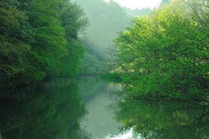 早朝の池の写真素材 [FYI00270010]