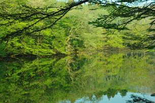 新緑の池の写真素材 [FYI00270014]