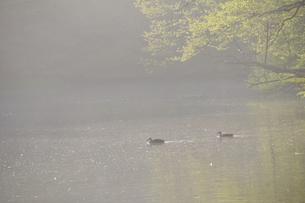 朝靄の池の写真素材 [FYI00270020]