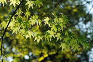 新緑の写真素材 [FYI00270021]