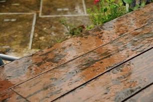雨の庭の写真素材 [FYI00270063]