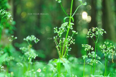 自然公園の草花の素材 [FYI00270067]