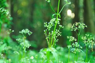 自然公園の草花の写真素材 [FYI00270067]