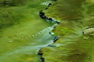 新緑を映す渓流の写真素材 [FYI00270073]