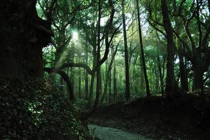 木漏れ日の道の写真素材 [FYI00270108]