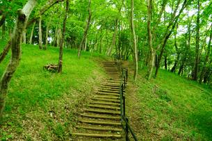 自然公園の階段の写真素材 [FYI00270135]