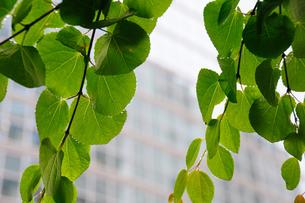 雨上がりのオフィス街の写真素材 [FYI00270166]