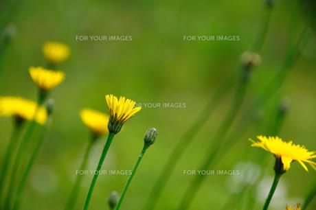 野原の花の素材 [FYI00270176]