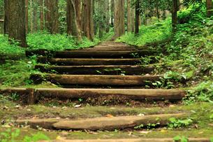 自然公園の山道の写真素材 [FYI00270233]