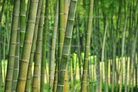 竹林の素材 [FYI00270234]
