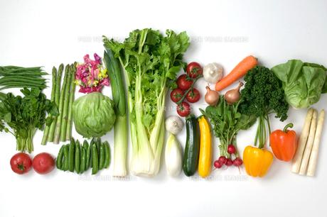 野菜の写真素材 [FYI00270567]