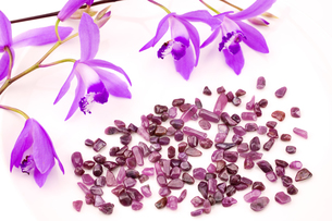 紫蘭の花とルビーの原石の写真素材 [FYI00270667]
