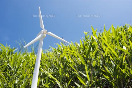 風力発電の模型と笹原の素材 [FYI00270679]
