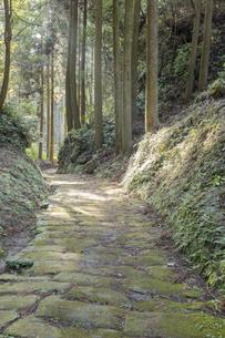 木漏れ日の当たる龍門司坂の石畳の素材 [FYI00270735]