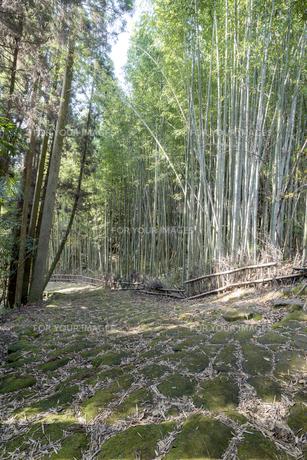 龍門司坂の石畳と竹林の素材 [FYI00270736]