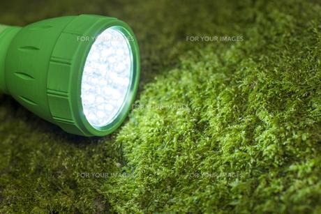 苔の上のLEDライトの写真素材 [FYI00270744]