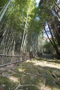 龍門司坂の石畳と竹林の素材 [FYI00270745]