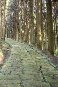 杉林の中の龍門司坂の石畳の素材 [FYI00270746]