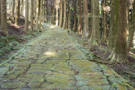 杉林の中の龍門司坂の石畳の素材 [FYI00270763]