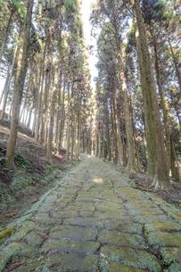 杉林の中の龍門司坂の石畳の素材 [FYI00270766]