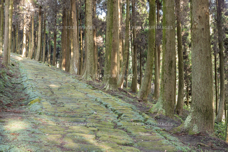 杉林の中の龍門司坂の石畳の素材 [FYI00270767]