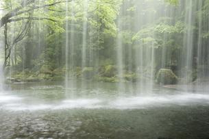 鍋ヶ滝の落水と緑の写真素材 [FYI00270850]