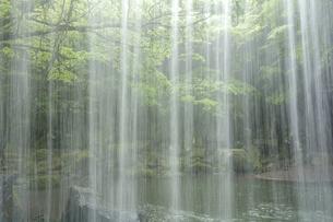 鍋ヶ滝の落水と緑の写真素材 [FYI00270865]