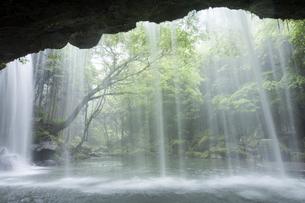鍋ヶ滝の落水と緑の写真素材 [FYI00270868]