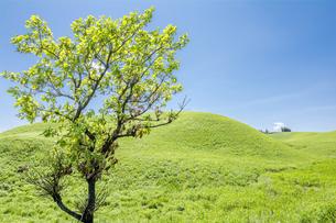 阿蘇の丘と柏の木の写真素材 [FYI00270873]